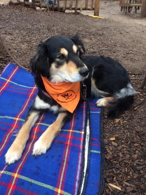 Unser Kita-Hund Paula
